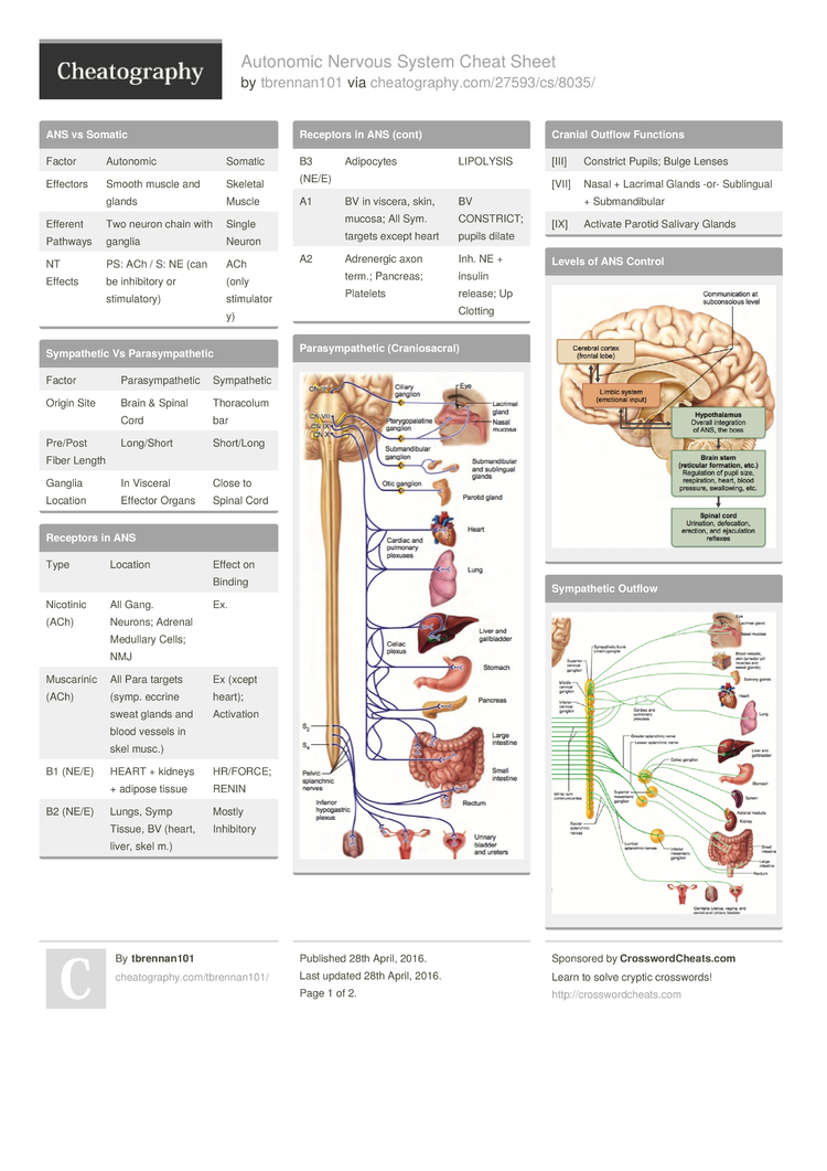 Autonomic Nervous System Cheat Sheet by tbrennan101 - Download free ...